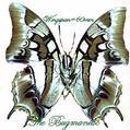 Nymphalidae : Polyura cognatus cognatus